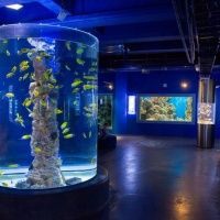 Океанариум | ТРК Планета Нептун
