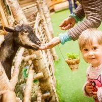 Детский развлекательный парк Зоорик