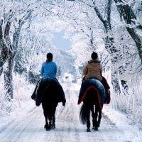 Конные прогулки. Вайцеховский и сын