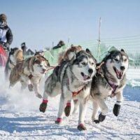 Катание на собачьей упряжке. Ледяной городок Хрустальная сказка