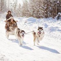 Катание в собачьей упряжке в Санкт-Петербурге