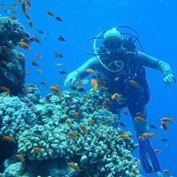 """Клуб подводного плаванья """"Немо"""""""