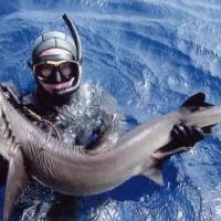 Обучение подводной охоте Клуб «Батискаф»