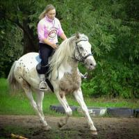 «Дом пестрой лошади»