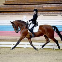 Школа верховой езды Favorite-Horse
