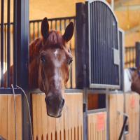 Катание на лошадях «Подворье Владыкино»
