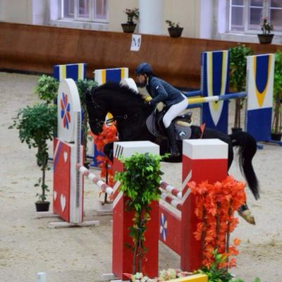 Предлагаю занятия на спортивных лошадях
